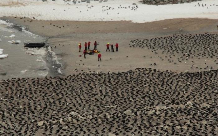 acj-penguins-on-antarctic-2