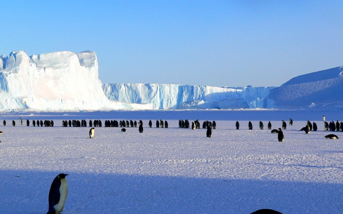 acj-penguins-on-antarctic-3