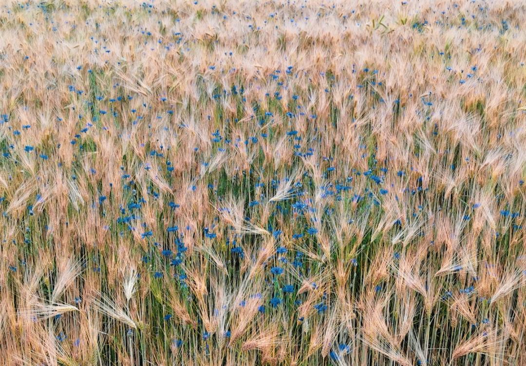 Farmland in Starkowo in Greater Poland