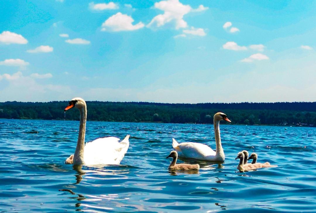 Lake in Wieleń in Greater Poland
