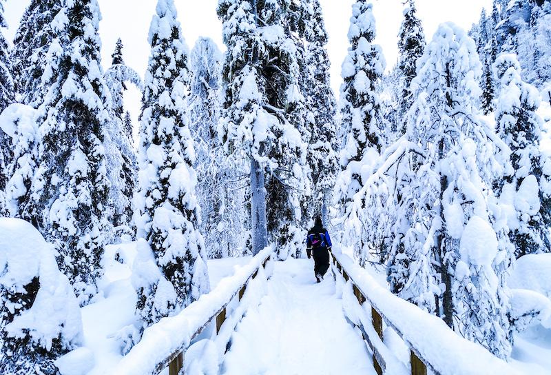 winter_activities_in_lapland12