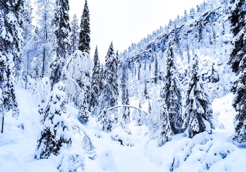 winter_activities_in_lapland16