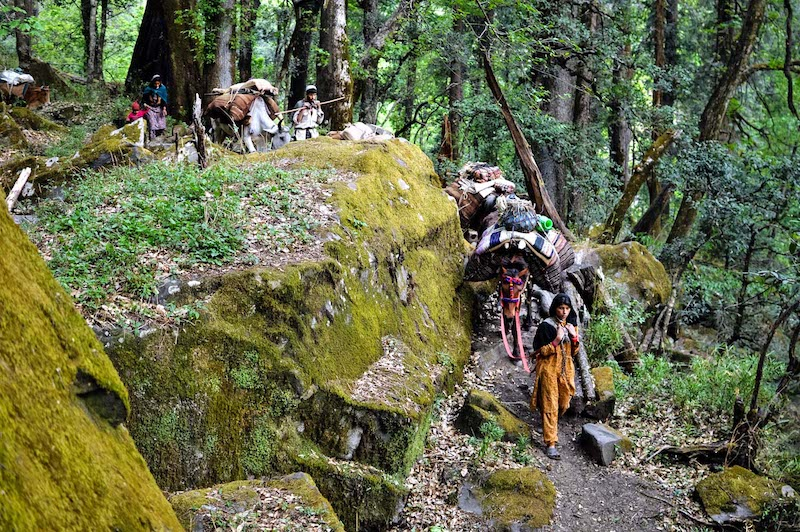 Van Gujjar tribe in the Himalayas during their annual migration