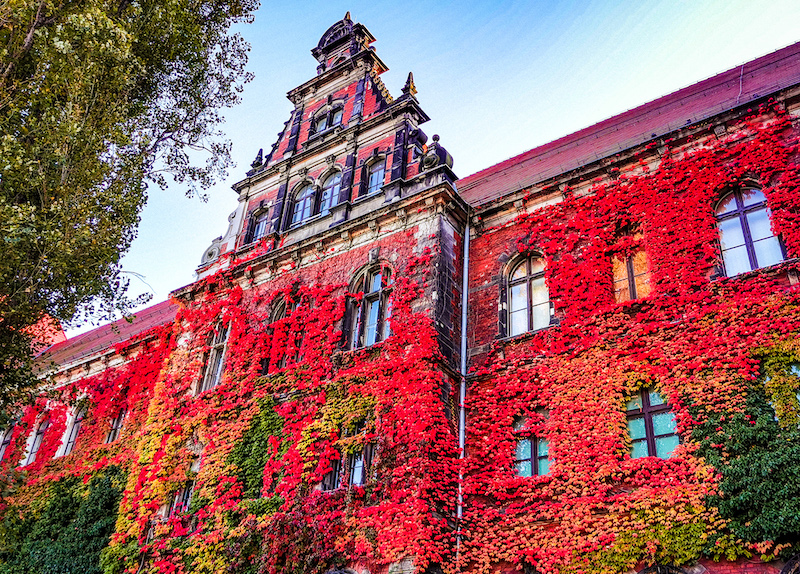 National Museum Wroclaw in autumn