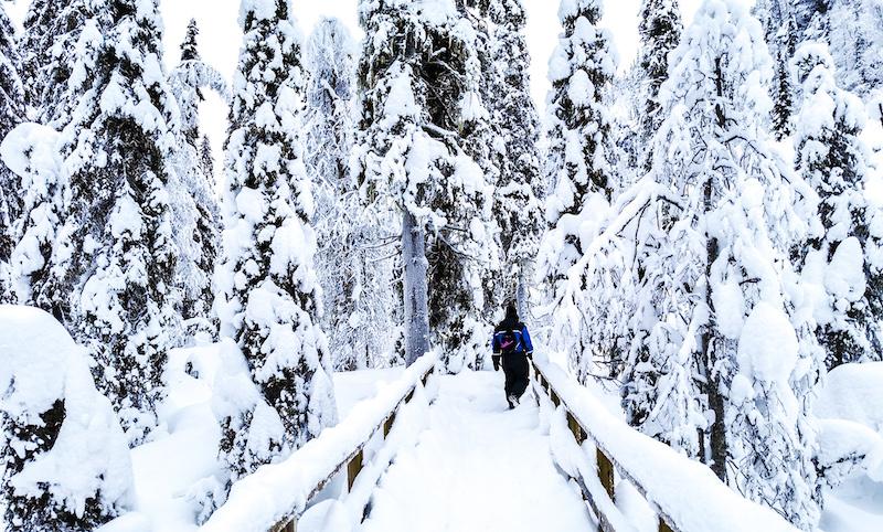Korouma Canyon in Lapland in winter