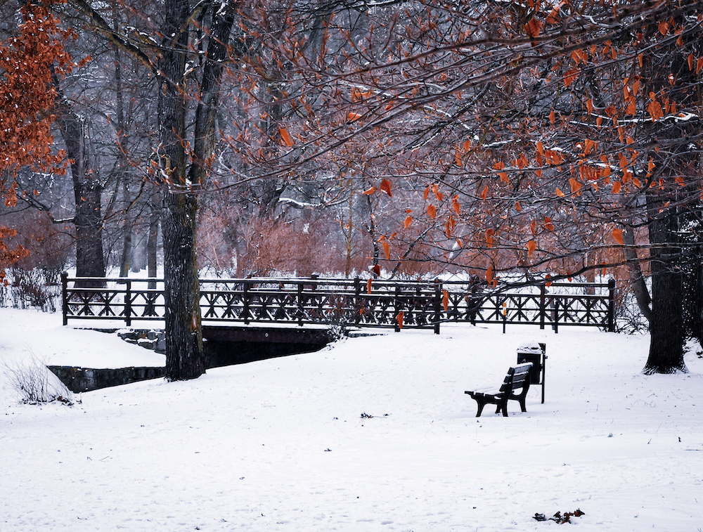 Park in Wroclaw in winter